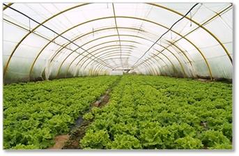 Generadores de ozono para agricultura